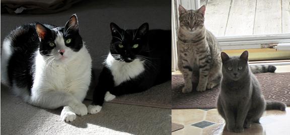 CATS 2shot